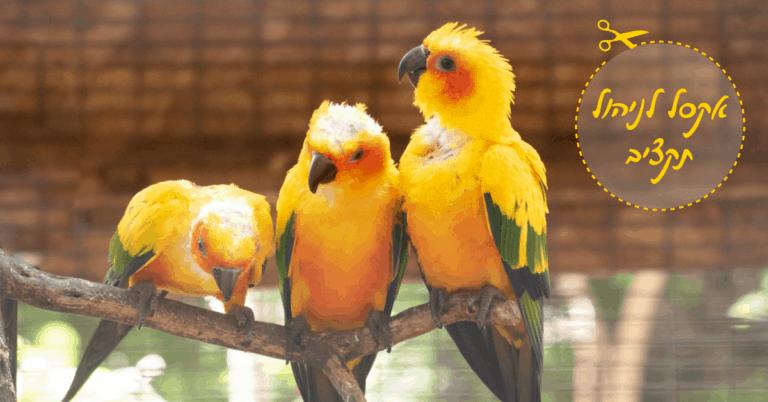 שלישיית תוכים צהובים בגן החיות בחיפה