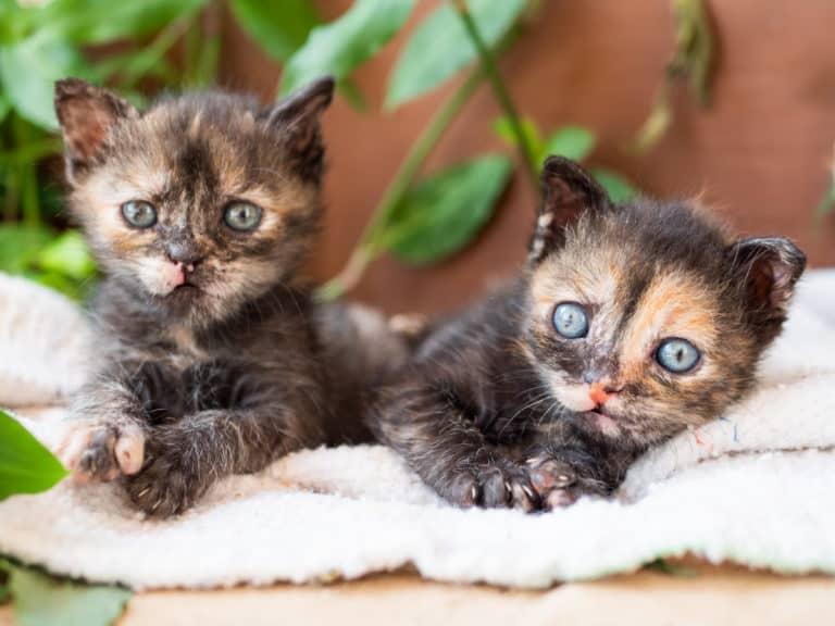שתי גורות חתולים מתוקות